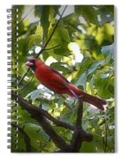 Flight Of The Cardinal Spiral Notebook