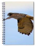 Flight Of The Hawk Spiral Notebook
