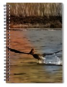 Flight Of The Pelican-featured In Wildlife-newbies And Comfortable Art Groups Spiral Notebook