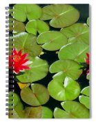 Floating Red Water Lilly Flowers On Pond Spiral Notebook