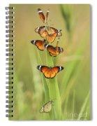 Flock Of Plain Tiger Danaus Chrysippus Spiral Notebook