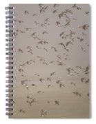 Flock Of Plovers Spiral Notebook