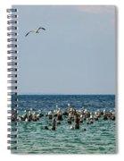 Flock Of Seagulls Spiral Notebook