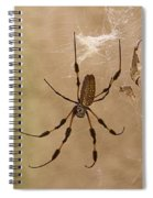 Florida Banana Spider Spiral Notebook