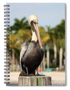 Florida Brown Pelican Spiral Notebook