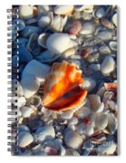 Florida Fighting Conch 1 Spiral Notebook