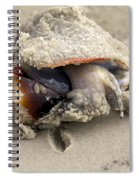 Florida Fighting Conch Spiral Notebook