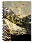 Florida King Snake Lampropeltis Getula Floridana Usa Spiral Notebook