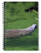 Florida Manatee  Spiral Notebook