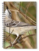 Florida Mockingbird Spiral Notebook