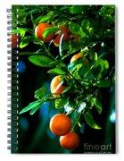Florida Oranges Spiral Notebook