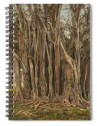 Florida Rubber Tree, C1900 Spiral Notebook