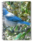 Florida Scrub Jay Spiral Notebook