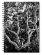 Florida Scrub Oaks Bw   Spiral Notebook