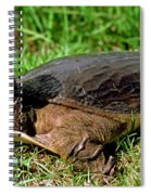 Florida Softshell Turtle Apalone Ferox Spiral Notebook