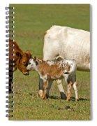 Florida Spanish Cattle Spiral Notebook