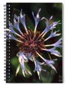 10415 Cornflower Spiral Notebook