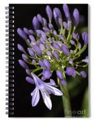 Flower- Agapanthus-blue-buds-one-flower Spiral Notebook