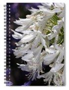 Flower-agapanthus-white-flora Spiral Notebook