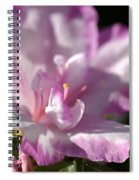 Flower--azalea-white-pink Spiral Notebook
