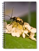 Flower Beetle Spiral Notebook