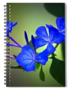 Flower Burst Spiral Notebook