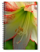 Flower Child Amaryllis Flower Art Spiral Notebook