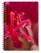 Flower Close Up II Spiral Notebook