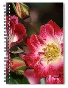 Flower-cream-pink-red-rose Spiral Notebook