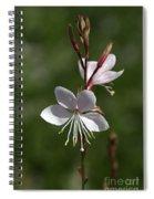 Flower-gaura-white  Spiral Notebook