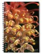 Flower-grevillea-superb Spiral Notebook