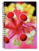 Flower In Pink Spiral Notebook
