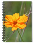 Flower Lit By The Sun's Rays Spiral Notebook