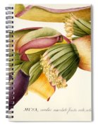 Flower Of The Banana Tree  Spiral Notebook
