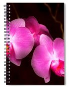 Flower - Orchid - Better In A Set Spiral Notebook