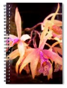 Flower - Orchid - Laelia - Midnight Passion Spiral Notebook
