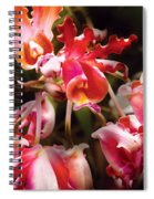 Flower - Orchid - Oncidium Orchid - Eye Candy Spiral Notebook