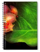 Flower - Orchid - Phalaenopsis Orchids At Rest Spiral Notebook