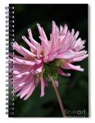 Flower-pink Dahlia-bloom Spiral Notebook