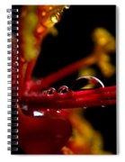 Flower Reflections Spiral Notebook
