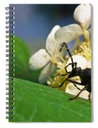 Flower Rise Over Beetle Spiral Notebook