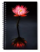 Flower - Water Lily - Nymphaea Jack Wood - Reflection Spiral Notebook