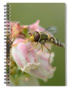 Flowerfly On Blueberry Blossom Spiral Notebook