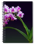 Flowers - Aerides Lawrenciae X Odorata Orchid Spiral Notebook