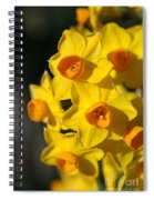 flowers-Jonquils-bright yellow Spiral Notebook