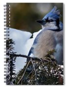 Fluffy Blue Jay Spiral Notebook