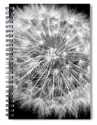 Fluffy Dandelion On Black Spiral Notebook