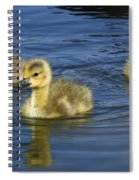 Fluffy Floaters  Spiral Notebook