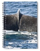Flukes Of A Sperm Whale Spiral Notebook