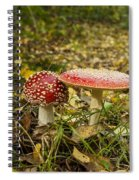 Fly Amanita Spiral Notebook